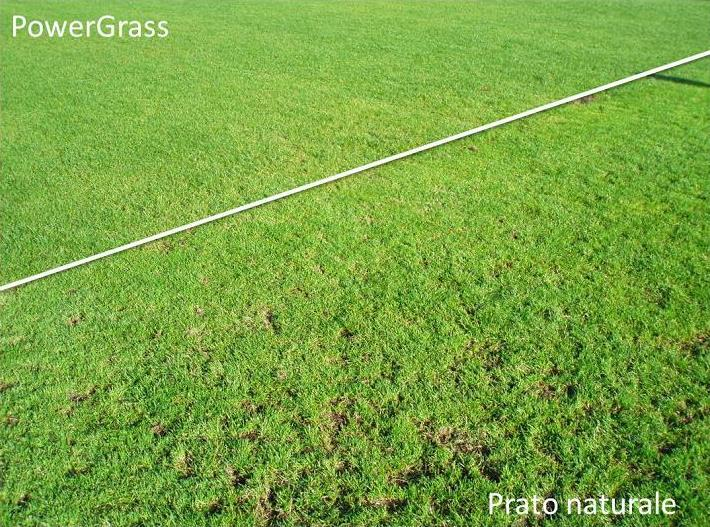 Hybrid turfgrass vs natural grass